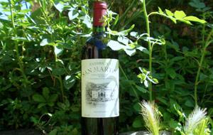 vino-biodinamico