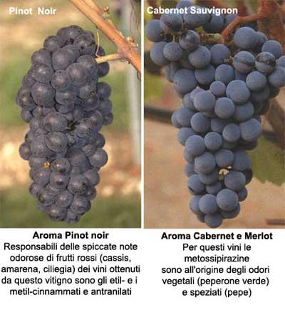 aromi-varietali-pinot-noir-e-cabernet-sauvignon