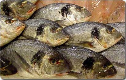 L 39 acquacoltura nell 39 antica roma le ricette di cucinaconoi for Ricette roma antica